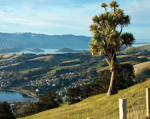 Dunedin/North Otago